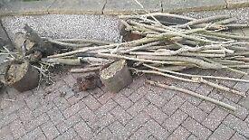 Free wood for wood burning