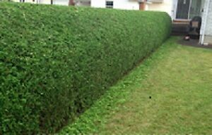 Outstanding Lawn, Garden & Home Care Peterborough Peterborough Area image 5