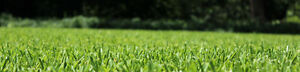 TOP-NOTCH LAWN CARE SERVICE WITH COMPETITIVE PRICING!