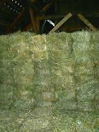 Second cut square bales - horse quality