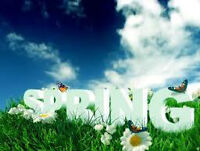 SPRING CLEANING..WINDOWS, STEAM CLEANING SERVICE