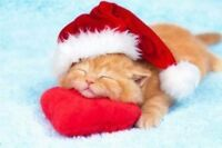 Cat boarding at very reasonable rates - book early for Christmas