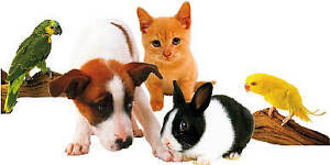 EVER THOUGHT ABOUT OPENING YOUR OWN PET STORE?
