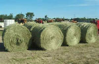 Premium 2nd cut hay for sale