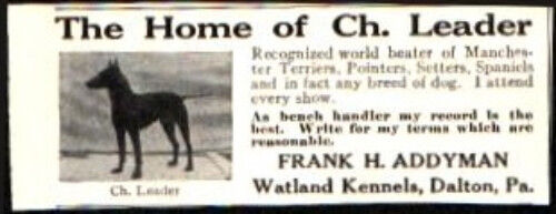 1912 Manchester Terrier Pointers Terriers etc Dog Vintage Print Ad 743