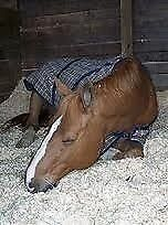 Healthy Bedding For Horses News Paper Shred A Bed