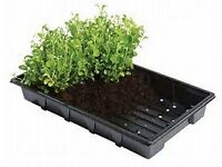 black seed trays