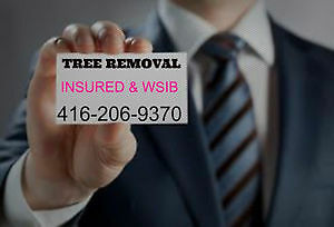 CUTTING*REMOVAL*CLEAN UP*DISPOSAL*TREES ALL WINTER. Oakville / Halton Region Toronto (GTA) image 1