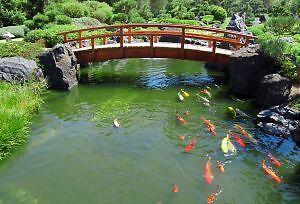 Pond+Aquarium