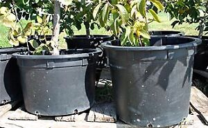 ISO Large/Extra Large Plant Pots/Boxes