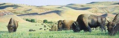 Scott Patton Art: Bison Western Wildlife Signed Print Buffalo Plains Landscape