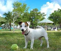 Professional Pooch Walking & Wash Service Boronia Heights Logan Area Preview