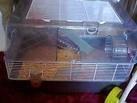 roborovski hamster and cage