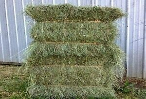 Square bales horse hay