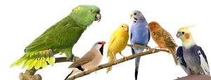 Any unwanted birds