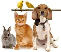 ** Loving, Professional, Experienced Pet Sitter Available! **