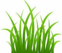 Yard maintenance/ entretien de pelouse