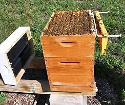 Wanted 200 to 300 hives with their bees