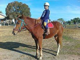 Quarter x mare Dunolly Central Goldfields Preview