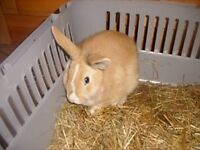 Rabbit looking for new home