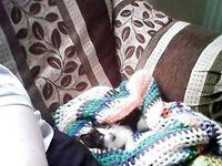 kittens female black and white last 1