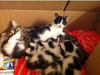 Only 2 kittens left!!!!!!!!!