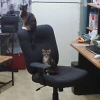 chat a donner