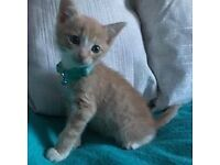*Stunning Bundle of Ginger Cuddles* ONLY ONE LIGHT GINGER BOY AVAILABLE