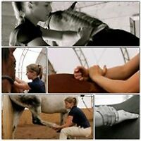 Equine Massage Clinic