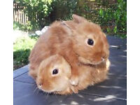 Beautiful baby rabbits ready to reserve