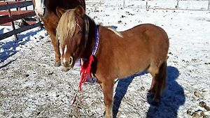 Pony needs forever home