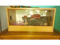 corn snake with vivarium and heat mat