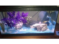 Fish Tank 50l