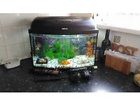 fish tank and cold water fish