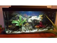 Lake Malawi Cichlids Tropical Fish Set up Aquarium Tank