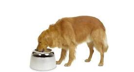 Raised dog bowl