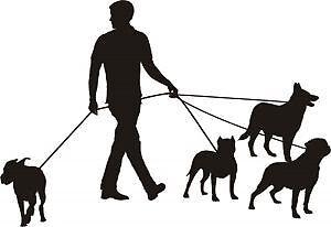 Dog Walker for Tripp Blvd Area