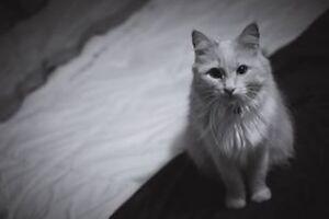 Beautiful Angora cat needs a forever home