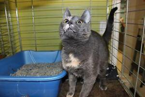 Young Female  - Domestic Short Hair London Ontario image 1
