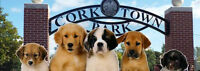 Volunteers for Pawz in the Park on July 25th