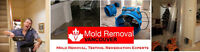 Let Experts Remove Your Black Mold! Get A Quote Today