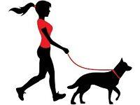 Dog Walking- Muddy Adventures Dog Walking Service, Competitive Rates