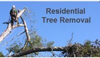 Tree Trimming and Removal