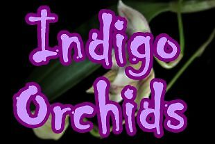 Indigo Orchids by Misty Forest