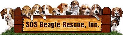 SOS Beagle Rescue Inc.