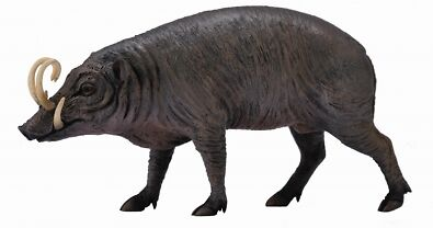 CollectA Wildlife Sulawesi Babirusa Toy Figure - Authentic Hand Painted Model