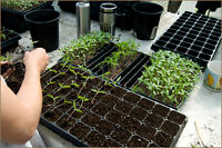 Free Plastic Seedling Tray(s)/Free Tomato Cage/Free Garden Tire