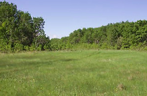 Quarter section of  beautiful unspoilt bush and grazing land