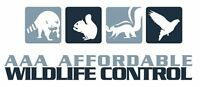 AFFORDABLE WILDLIFE CONTROL  Raccoon & Squirrel Removal