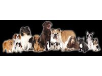 Happy Trails Pet Services experienced dog walker and minder Bangor,Groomsport,Donaghadee etc